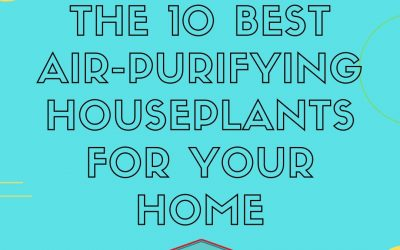 Green Home Essentials: 10 Plants for Air Purification
